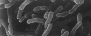 Une info sur le microbiote…
